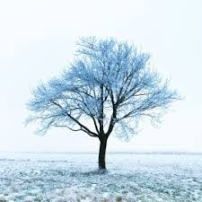 preparing your trees for winter thriftyfun
