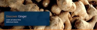 Is Ginger Root A Vegetable - ginger root or stem jenier world of teas