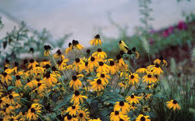 Nc Backyard Birds Landscaping For Wildlife With Native Plants Nc State Extension