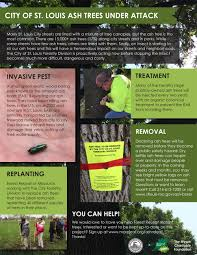 emerald ash borer information and resources