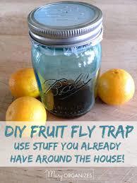 Small Flies In Bathroom Sink Get Rid Of Fruit Flies For Good Creatingmaryshome Com