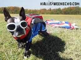target halloween dog costumes 10 adorable diy halloween costumes for pets zero the dog costume