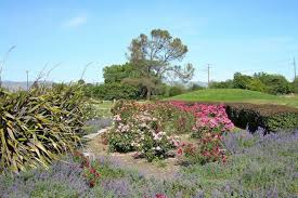 Flower San Jose - san jose attractions and activities attraction reviews by 10best