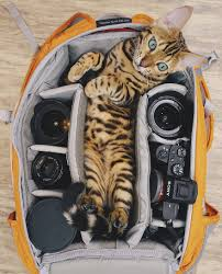 traveling with cats images Meet suki the traveling cat who 39 s living a better life than you jpg