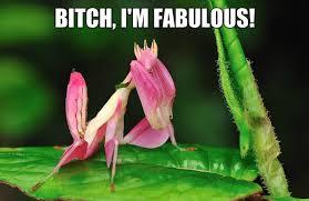 Bitch Im Fabulous Meme - bitch im fabulous jokeitup com