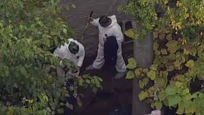 nypd digs for possible human remains in backyard nbc new york