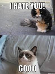 Unhappy Cat Meme - cat meme lion king