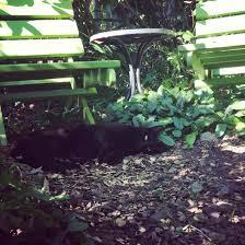 new gardens wendy u0027s place