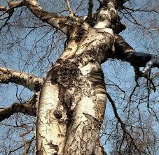 tree as human 131151825 added by tarnis at