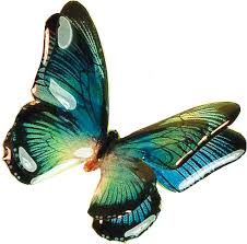 brilliant 3 d butterflies windows brilliant resin and supplies