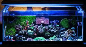 Tailes Veng 2014 Featured Nano Reef Aquariums Nano Reef Com Community