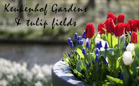 the netherlands keukenhof gardens and tulip fields life as