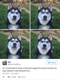 Dog Owner Meme - owner pretends to throw ball and captures the exact moment dog