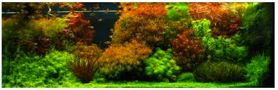 Aquascaping World Types Of Design