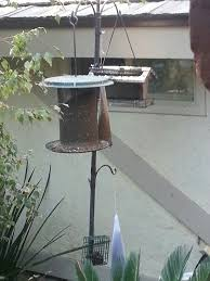 best 25 nyjer seed ideas on pinterest pretty birds backyard