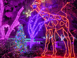 san antonio tree lighting 2017 san antonio zoo gets lit the paisano