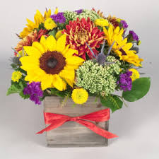 Flower Shops Inverness - morning glory flower shop