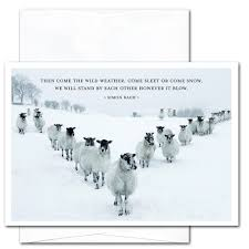 new years cards for business boxed sleet or snow