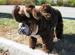 Funny Halloween Animal Costumes 29 Dinosaurs U0026 Dogs Images Dinosaurs Pet