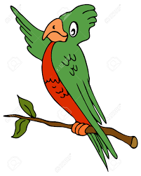 parrot sketch images u0026 stock pictures royalty free parrot sketch