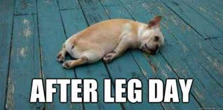 All Day Meme - the 12 best leg day memes that anyone who works out can relate to