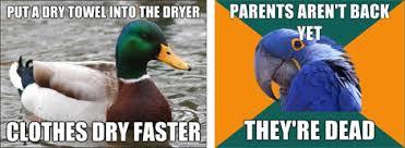 Parrot Meme - paranoid advice mallard meme meaning and origin