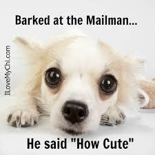 Meme Chihuahua - 20 chihuahua memes that will make you laugh