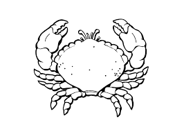 nice sea turtle coloring pages about affordable article ngbasic com