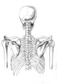 drawn skeleton human skeleton pencil and in color drawn skeleton