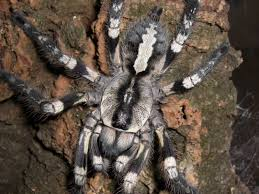 more spiders are awesome it s tarantula time album on imgur