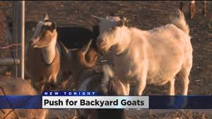 first chickens now goats group wants to expand sacramento u0027s