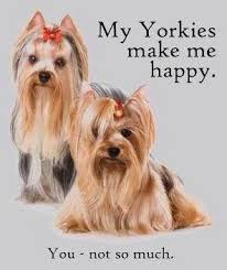 yorkie hair cut chart 330 best yorkies images on pinterest yorkie yorkshire terriers