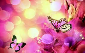 butterflies four butterfly creative digital