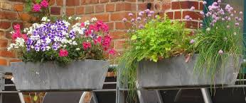 balkon grã npflanzen pflegetipps für ihre balkonpflanzen