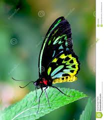 butterfly stock image image of colors free coloring