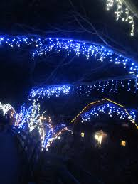 violet u0027s silver lining things to do in ohio wildlights at