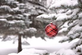 snowy tree vectors photos and psd files free