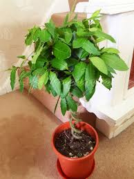 Fragrant Indoor House Plants - stunning fragrant indoor plants contemporary interior design