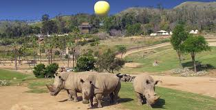 balloon safari san diego zoo safari park