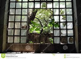 window tree stock image image of damaged desolate 16256773