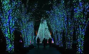 Botanical Gardens Atlanta Lights Lights On Display At Atlanta Botanical Gardens Www Wsbtv