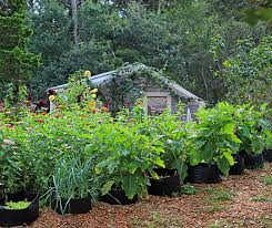 get smart whole life gardening