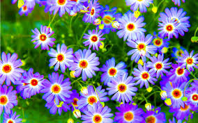Images Of Pretty Flowers - pretty flowers best background wallpaper
