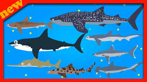 sharks sea animals for children learn sharks sea animals names