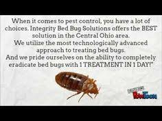 The Best Way To Kill Bed Bugs Bed Bug Behavior U0026 Habits What Do Bed Bugs Do Insects