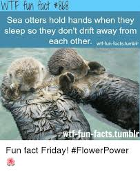 Sea Otter Meme - wtf fun fact 8b8 sea otters hold hands when they sleep so they don