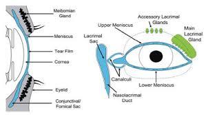 ayrshire eye