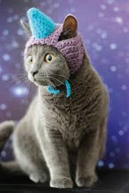 best 25 cats in hats ideas on pinterest kittens kitty and cats