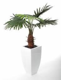 artificial 4ft ficus natasja tree t040g from artplants co uk