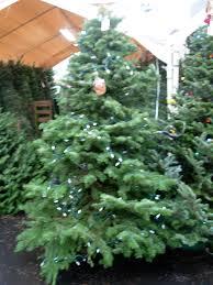 christmas trees u2013 hammond forever house